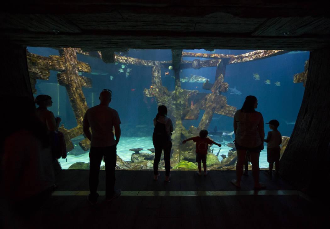 Visitors explore the Shark Reef Aquarium at Mandalay Bay hotel-casino in Las Vegas on Tuesday, May 30, 2017. Chase Stevens Las Vegas Review-Journal @csstevensphoto