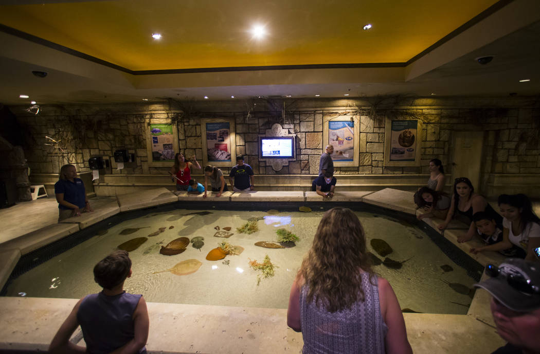 Visitors take a look at a variety of stingrays at Shark Reef Aquarium at the Mandalay Bay hotel-casino in Las Vegas on Tuesday, May 30, 2017. Chase Stevens Las Vegas Review-Journal @csstevensphoto