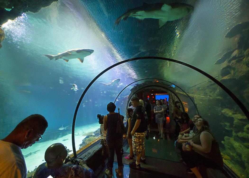 When sharks attract — PHOTOS | Las Vegas Review-Journal