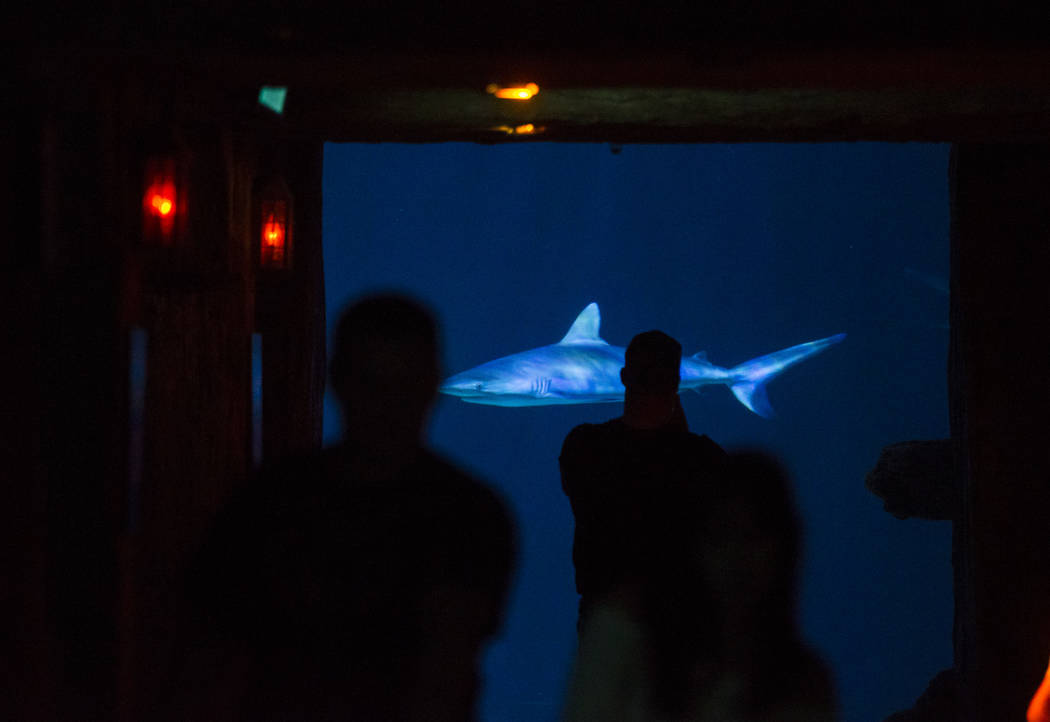 Visitors explore the Shark Reef Aquarium at the Mandalay Bay hotel-casino in Las Vegas on Tuesday, May 30, 2017. Chase Stevens Las Vegas Review-Journal @csstevensphoto