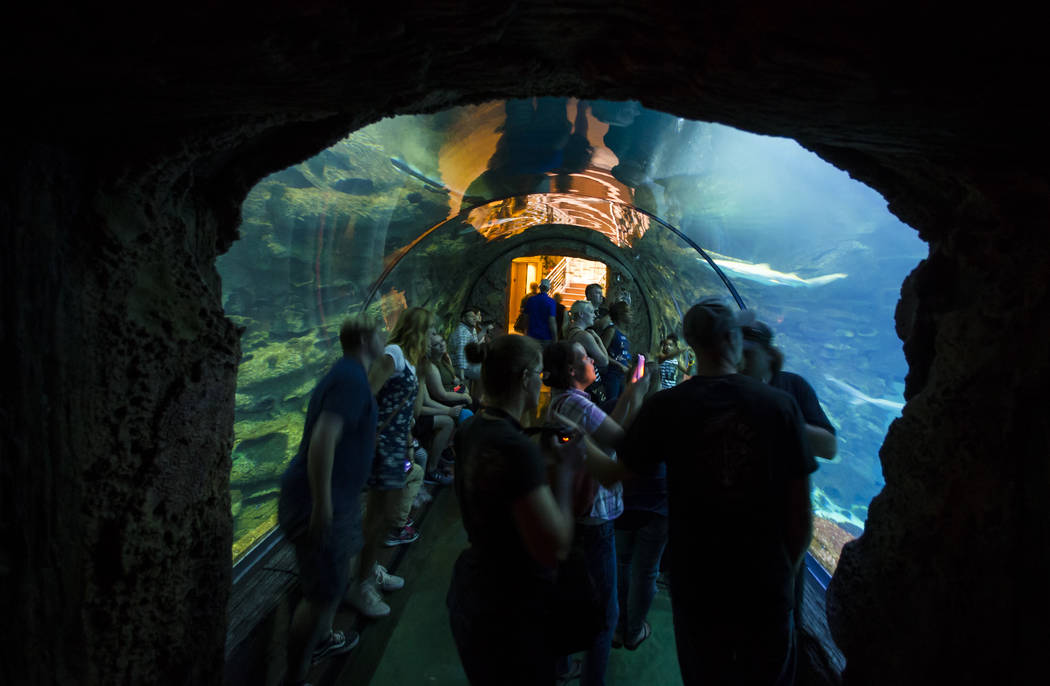 Visitors explore a tunnel exhibit at the Shark Reef Aquarium at Mandalay Bay hotel-casino in Las Vegas on Tuesday, May 30, 2017. Chase Stevens Las Vegas Review-Journal @csstevensphoto