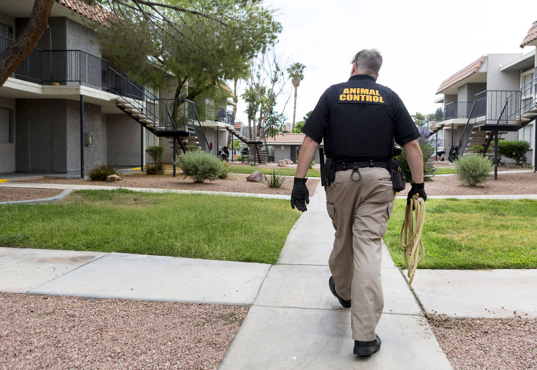 Animal control officer Mike Felton goes to collect an abandoned dog in an apartment complex in Las Vegas, Wednesday,  May 31, 2017. Elizabeth Brumley/Las Vegas Review-Journal