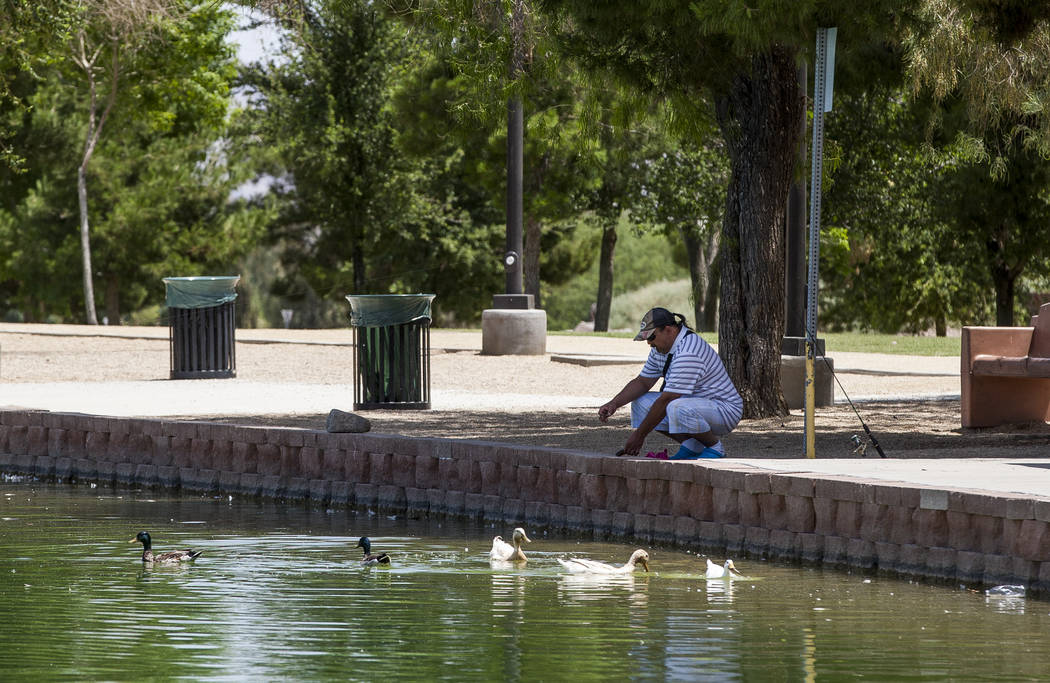 A man feeds geese and ducks at Sunset Park on Tuesday, June 6, 2017. (Patrick Connolly Las Vegas Review-Journal) @PConnPie