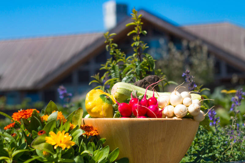 Dave Mathews The Inn at Newport Ranch staff grows their own organic produce in gardens on the premise available for guests to try.