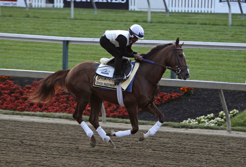 Preakness contender Senior Investment gallops during a workout at Pimlico Race Course in Baltimore, Thursday, May 18, 2017. The Preakness Stakes horse race is scheduled to take place May 20. (AP P ...