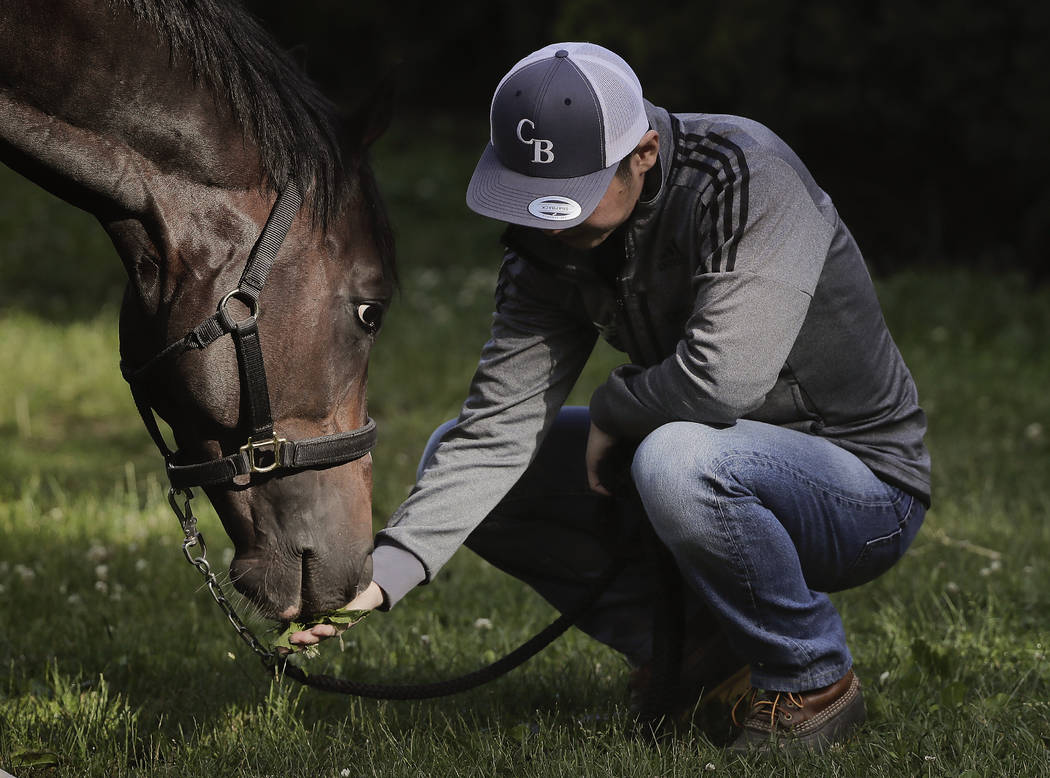 Assistant trainer Masaaki Minamida feeds Belmont Stakes hopeful Epicharis a handful of grass outside the barn, Thursday, June 8, 2017, in Elmont, N.Y. Epicharis, who is in the field of 12 for the  ...