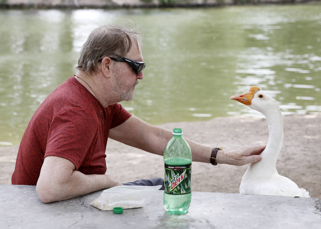 Gary DeVaney and a Chinese goose relax at Floyd Lamb Park at Tule Springs, Thursday, June 8, 2017, in Las Vegas. (Bizuayehu Tesfaye/Las Vegas Review-Journal) @bizutesfaye