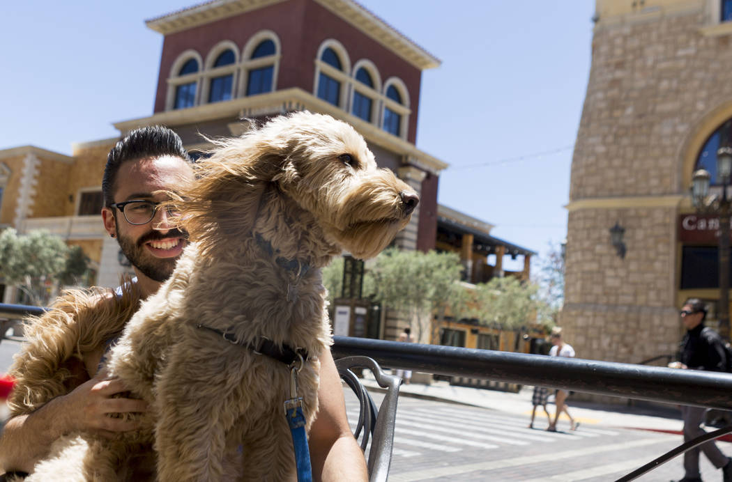 Matthew Shapiro holds Sully a Golden Doodle that enjoys the wind at Leone Cafe in Tivoli Village, Las Vegas, Sunday, June 11, 2017. Elizabeth Brumley/ The Las Vegas Review-Journal