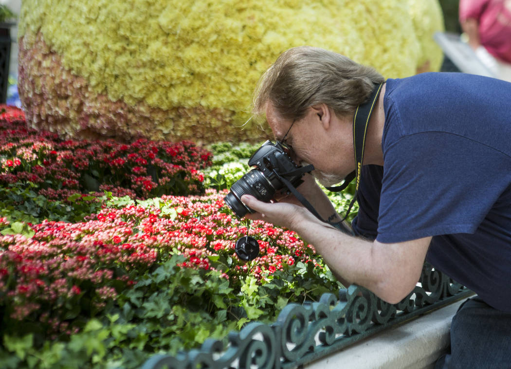 Russell Enniss, a Las Vegas resident, gets close up shots of flowers during the opening of the new Italian-inspired display at Bellagio's Conservatory & Botanical Gardens on Monday, June 12, 2 ...