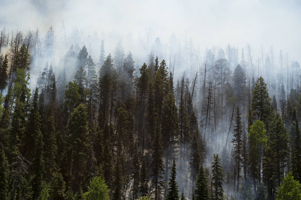 Smoke rises between the trees as a wildfire burns along State Route 143, Sunday, June 18, 2017, the primary road to the southern Utah ski town of Brian Head, Utah. Firefighters were hoping to have ...
