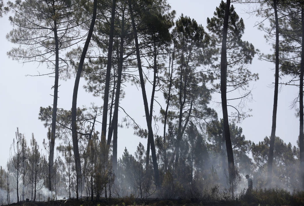 A man, right, walks along a recently burnt patch of pine forest in Serra do Macario, central Portugal, Tuesday, June 20 2017. (Armando Franca/AP)