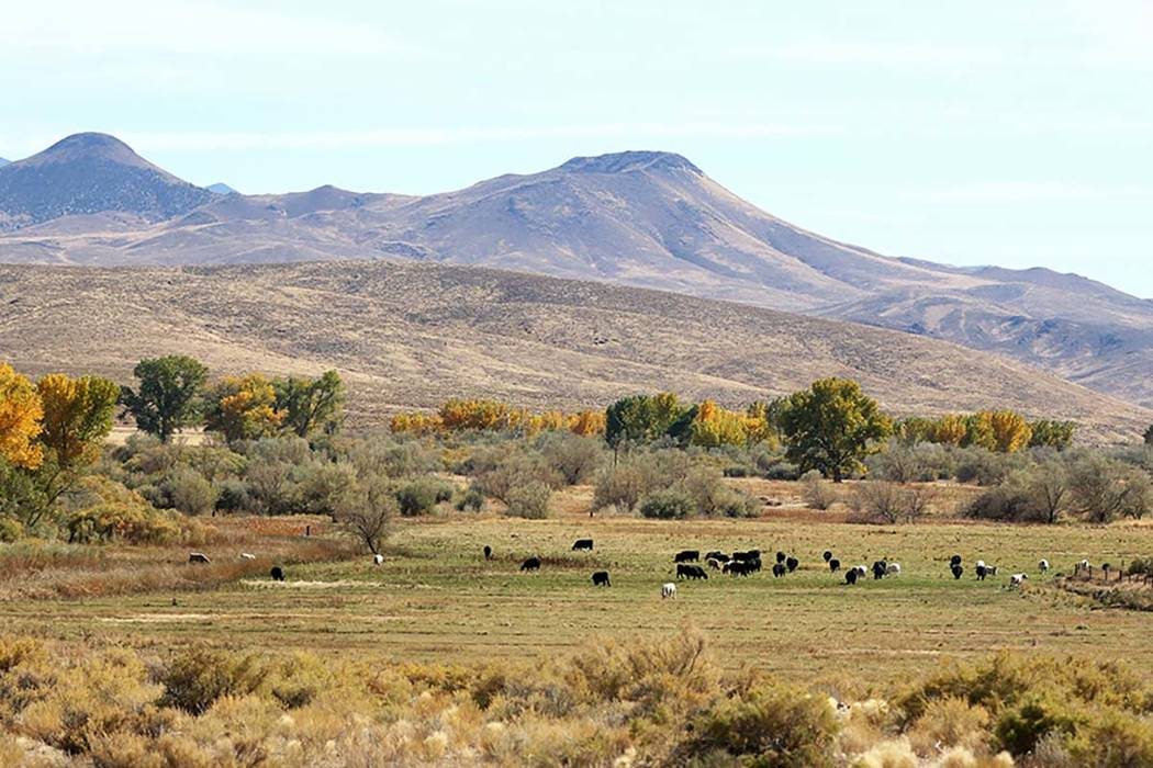 The Walker River State Recreation Area will add more than 12,000 acres to Nevada's state parks with land donated from the Walker Basin Restoration Program.  The planned recreation area is i ...