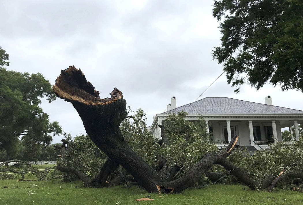 A large piece of a live oak tree covers the ground after a slow moving storm passed Beauvoir, Miss., on Wednesday, June 21, 2017.  Slow-moving Tropical Storm Cindy sent drenching rain bands over t ...