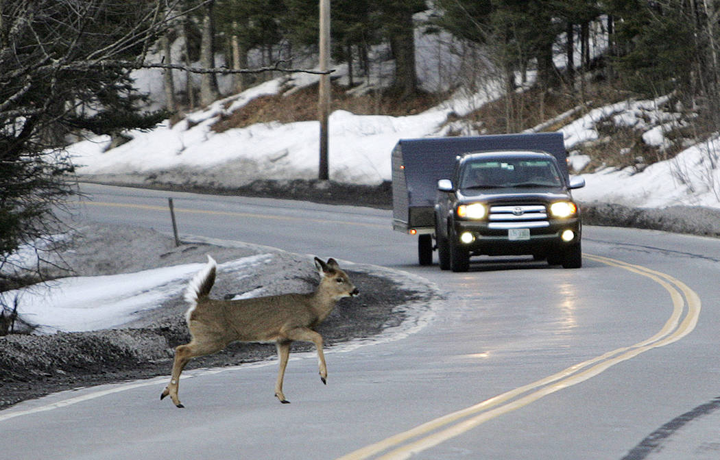 A deer runs across the road in Pittsburg, N.H. In Oregon, under a road kill bill passed overwhelmingly by the Legislature and signed by the governor, motorists who crash into the animals can now h ...