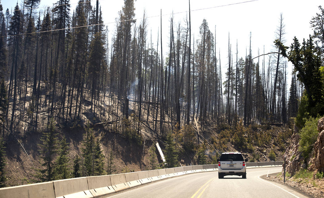 Smoke rises between charred trees after a wildfire along State Route 143, Sunday, June 18, 2017, the primary road to the southern Utah ski town of Brian Head, Utah. Firefighters were hoping to hav ...