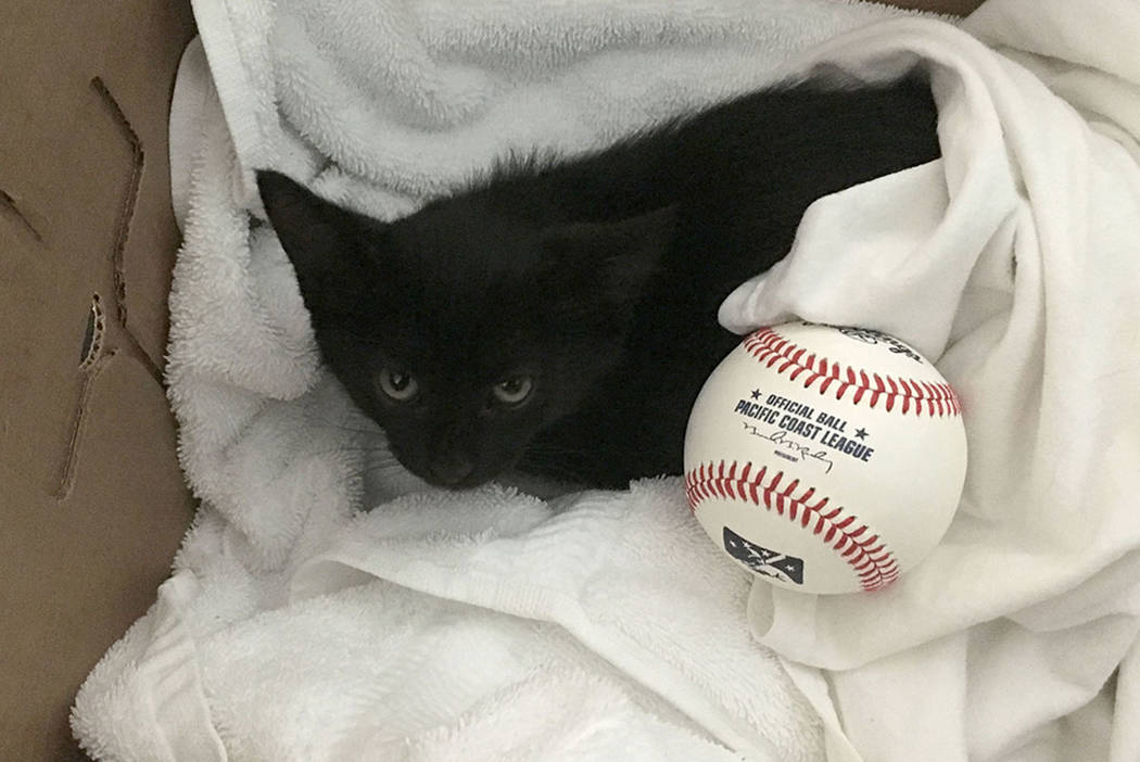 Koufax the kitten before she was adopted in early June. (Photo by Deb Iwanow)