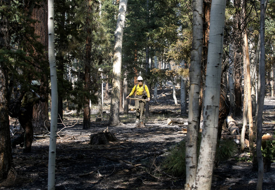 A firefighter pauses between cutting burned  trees in an area in Dixie National Forest off State Route 143 on Tuesday, June 27, 2017. Bridget Bennett Las Vegas Review-Journal @bridgetkbennett