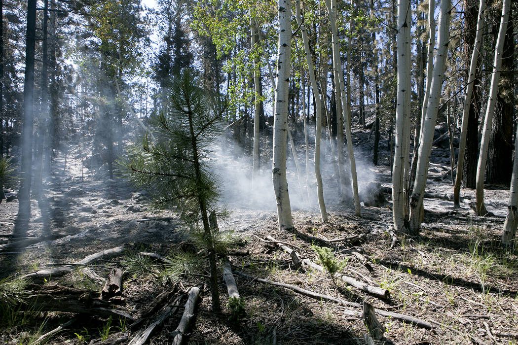 A stump smolders an area in Dixie National Forest off State Route 143 on Tuesday, June 27, 2017. Bridget Bennett Las Vegas Review-Journal @bridgetkbennett