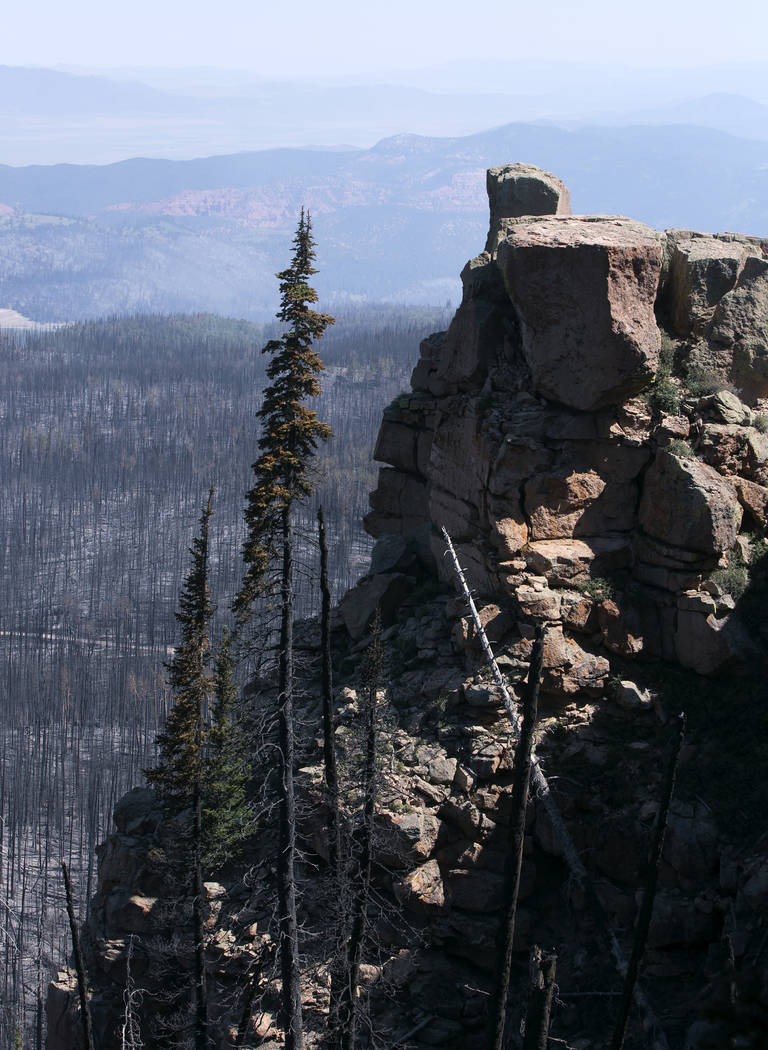 Burnt vegetation is seen from a point east of where the fire started at Brian Head, Utah, in Dixie National Forest a few miles off State Route 143 on Tuesday, June 27, 2017. Bridget Bennett Las Ve ...