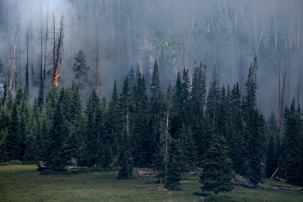 Smoke rises behind vegetation as trees burn in Dixie National Forest off State Route 143 on Tuesday, June 27, 2017. As of June 27, 2017 the fire was nearing 50,000 acres. Bridget Bennett Las Vegas ...