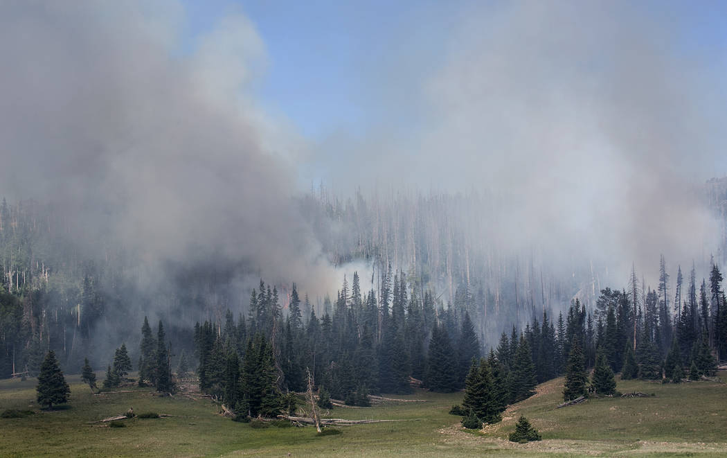 Smoke rises behind vegetation in Dixie National Forest off State Route 143 on Tuesday, June 27, 2017. Bridget Bennett Las Vegas Review-Journal @bridgetkbennett