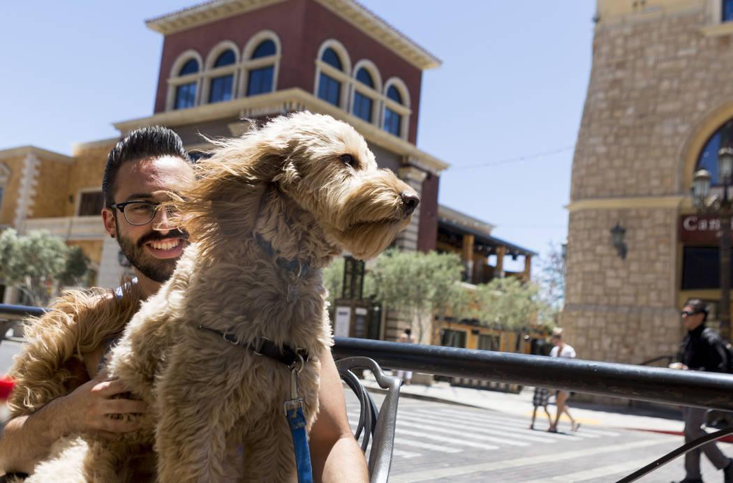 Matthew Shapiro holds Sully a Goldendoodle that enjoys the wind at Leone Cafe in Tivoli Village, Las Vegas, Sunday, June 11, 2017. Elizabeth Brumley Las Vegas Review-Journal