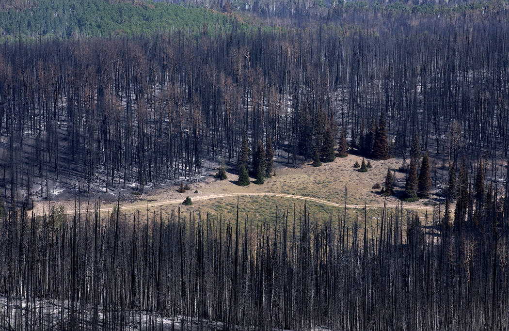 Burnt vegetation surrounds a road, seen from a point east of where the fire started at Brian Head, Utah, in Dixie National Forest a few miles off State Route 143 on Tuesday, June 27, 2017. Bridget ...