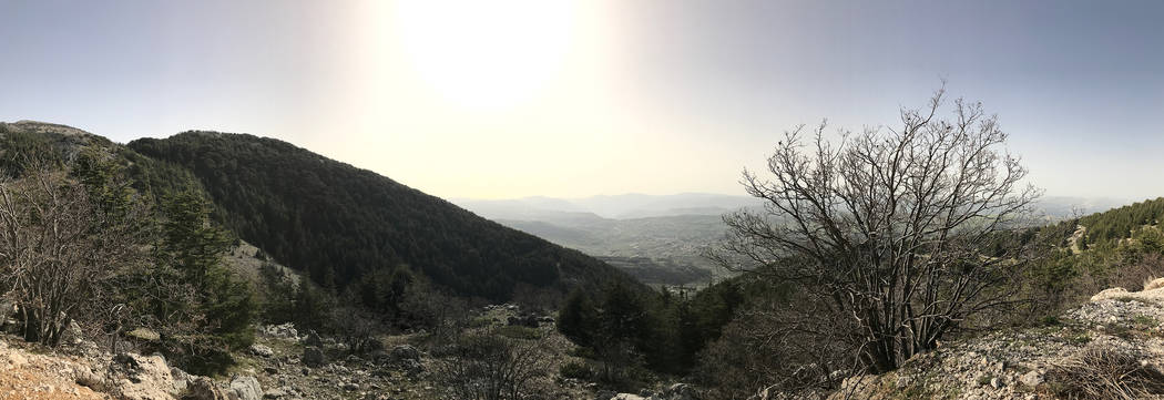 The view from the Al Shouf Cedar Natural Reserve in Lebanon, April 2017 (Harrison Keely)