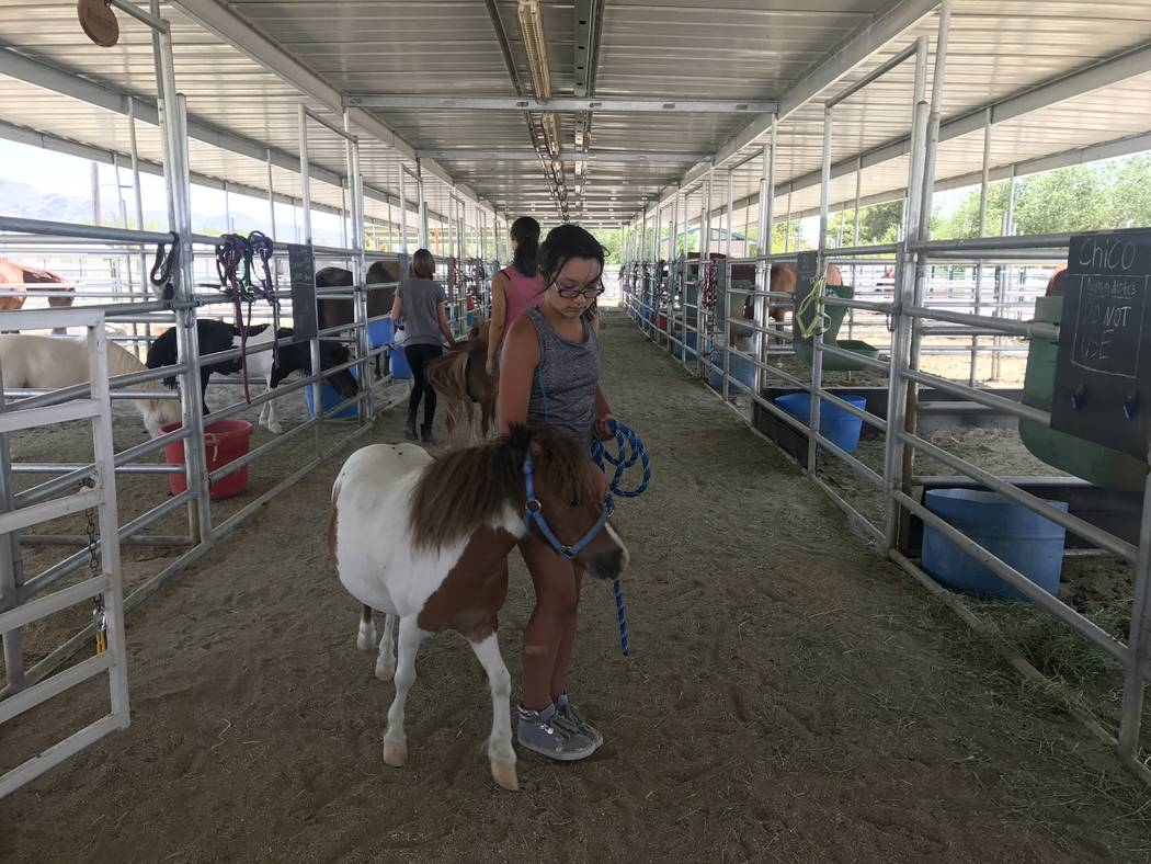A summer camp student practices walking a small horse on June 27 at the Horses4Heroes Community Equestrian Center at Floyd Lamb Park at Tule Springs on June 27. (Kailyn Brown/View) @KailynHype