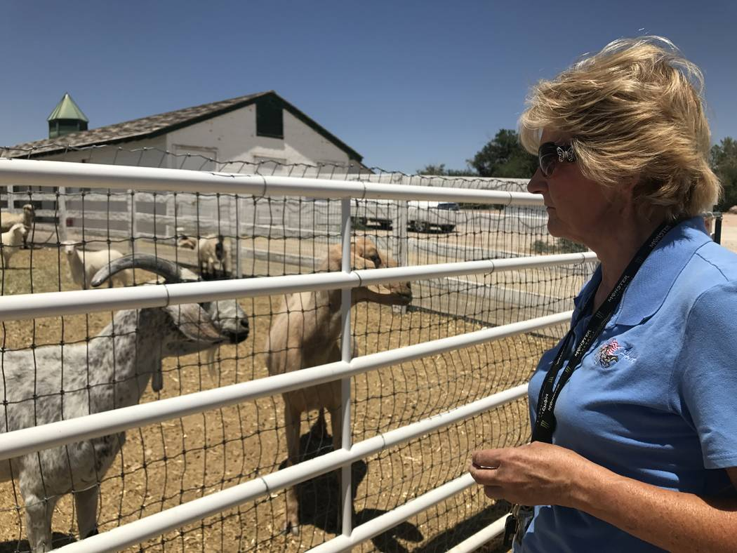 Sydney Knott visits goats in the barnyard June 27 at the Horeses4Heroes Community Equestrian Center at Floyd Lamb Park at Tule Springs. (Kailyn Brown/View) @KailynHype
