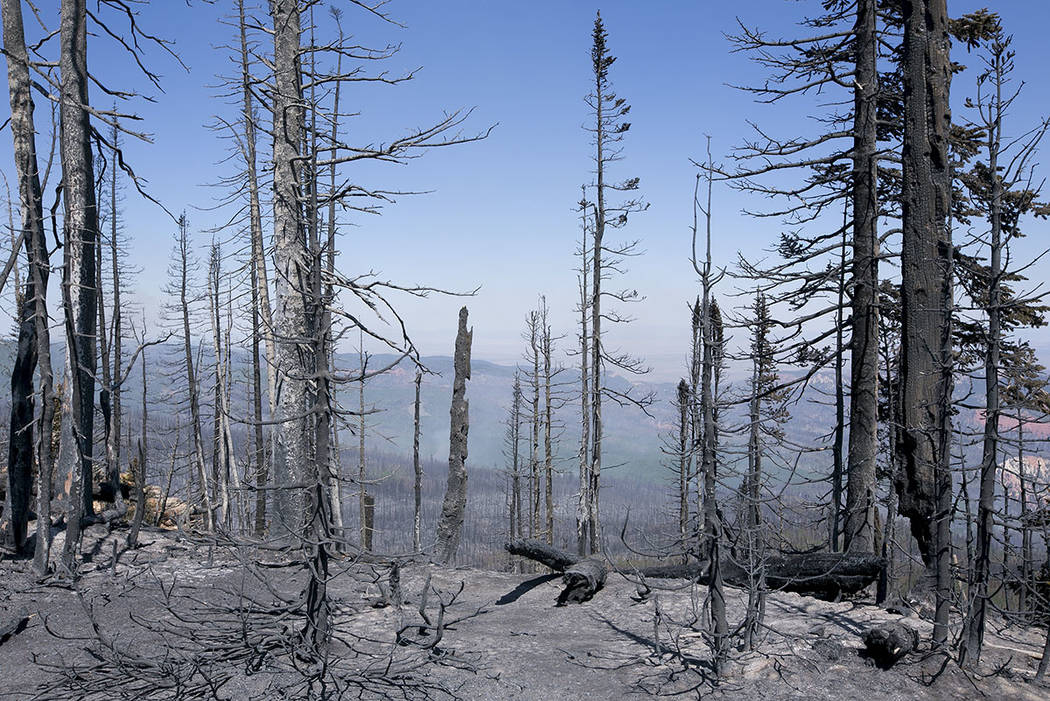 Burt vegetation is seen from a point east of where the fire started at Brian Head, Utah, in Dixie National Forest a few miles off State Route 143 on Tuesday, June 27, 2017. (Bridget Bennett Las Ve ...