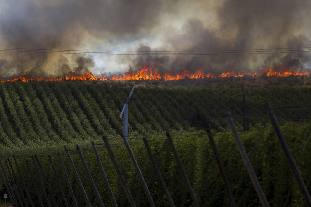 Fire creeps towards orchards on Rattlesnake Ridge in Moxee, Wash., on Thursday, July 6, 2017. The fire burned more than 5,500 acres of mostly grass and brush in less than 24 hours, and threatened  ...