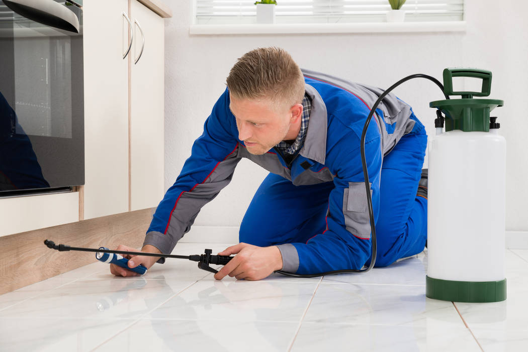 Thinkstock Even the bravest homeowners need to ask for help every now and then. And when it comes to pest control, you should make that call sooner rather than later.