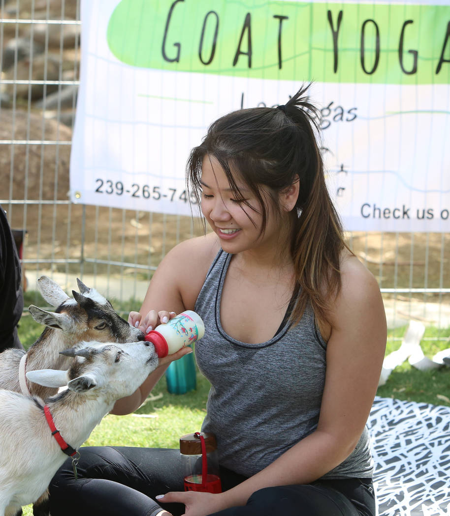 Nicole Munoz feeds baby goats after taking a goat yoga class at Western Trails Neighborhood Park in Las Vegas on Saturday, July 8, 2017. Bizuayehu Tesfaye/Las Vegas Review-Journal @bizutesfaye