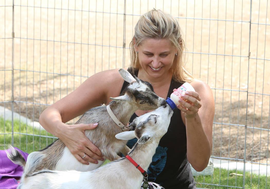 Hillary Smoot bottle feeds baby goats after taking a goat yoga class at Western Trails Neighborhood Park in Las Vegas on Saturday, July 8, 2017. Bizuayehu Tesfaye/Las Vegas Review-Journal @bizutesfaye