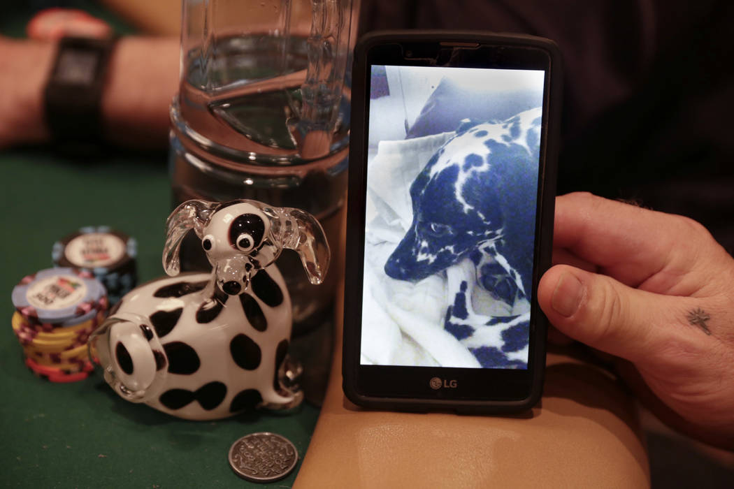 Brian Somerville brought a glass statue of his dog, Julie, for good luck to the World Series of Poker at the Rio Convention Center in Las Vegas, Tuesday,July 11, 2017.  Gabriella Angotti-Jones Las ...