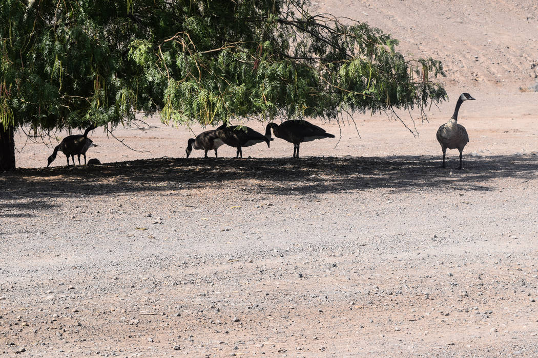Since it's establishment, the preserve has identified 295 unique bird species, Becker said. (Alex Meyer/View) @alxmey