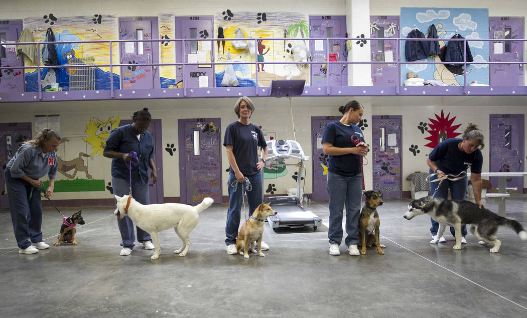 Inmates with their dogs inside the Pups on Parole cell block at the Florence McClure Women's Correctional Center in Las Vegas on Tuesday, July 11, 2017. Richard Brian Las Vegas Review-Journal @veg ...