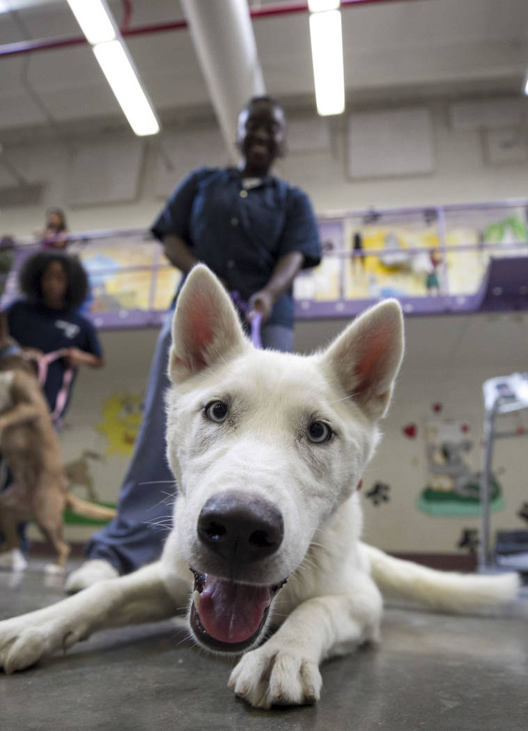Inmate Simone Taylor with Stormy, a Siberian husky, inside the Pups on Parole cell block at the Florence McClure Women's Correctional Center in Las Vegas on Tuesday, July 11, 2017. Richard Brian L ...