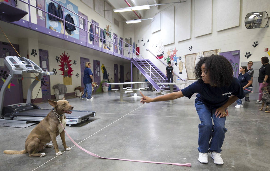 Inmate Pattae Robinson gives a command to Hazel, an Australian cattle dog, inside the Pups on Parole cell block at the Florence McClure Women's Correctional Center in Las Vegas on Tuesday, July 11 ...