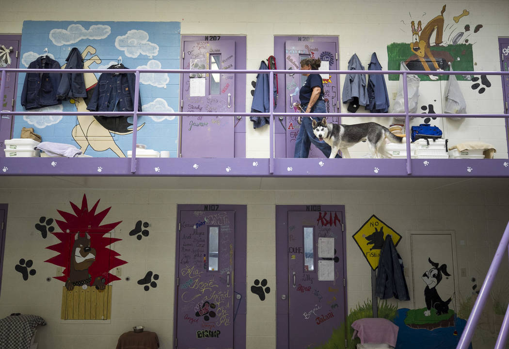 An inmate walks a dog inside the Pups on Parole cell block at the Florence McClure Women's Correctional Center in Las Vegas on Tuesday, July 11, 2017. Richard Brian Las Vegas Review-Journal @vegas ...
