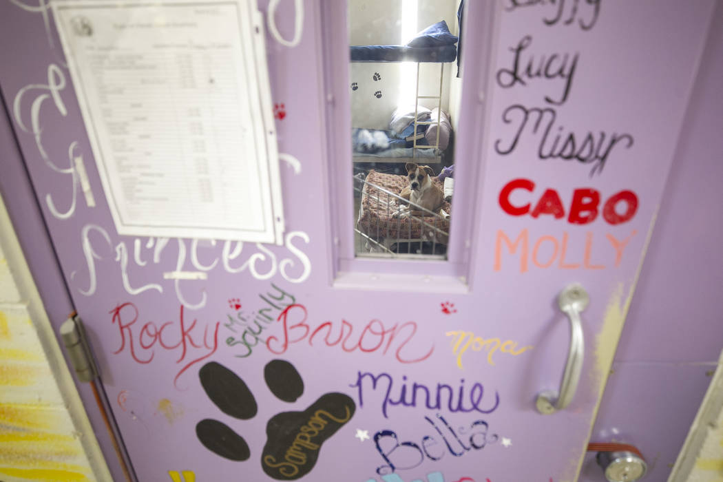 A dog sits inside a cell room at the Pups on Parole cell block at the Florence McClure Women's Correctional Center in Las Vegas on Tuesday, July 11, 2017. Richard Brian Las Vegas Review-Journal @v ...