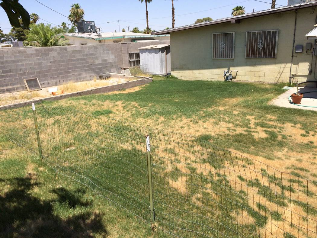 Bob Morris Summer diseases favor warm temperatures and humid conditions. If your lawn is watered and still wet when night approaches, disease is more likely.