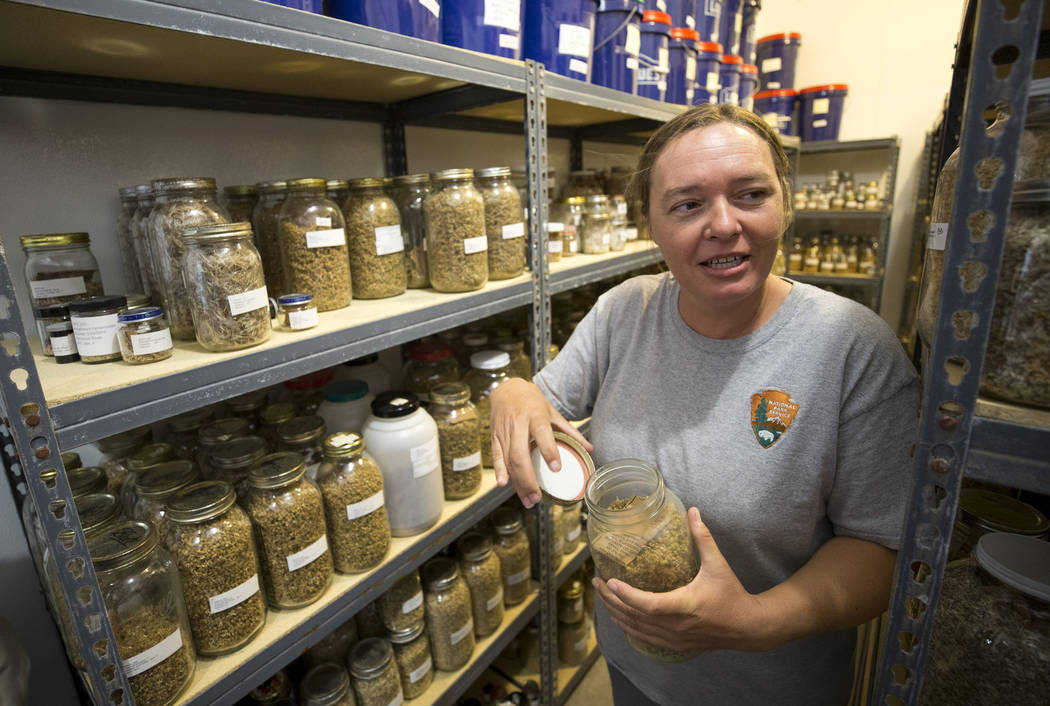 Biologist Kelly Wallace, manager of Song Dog Native Plant Nursery, opens a jar of ambrosia dumosa seeds, Saturday, July 15, 2017, in the seed storage room at the nursery located inside the Lake Me ...