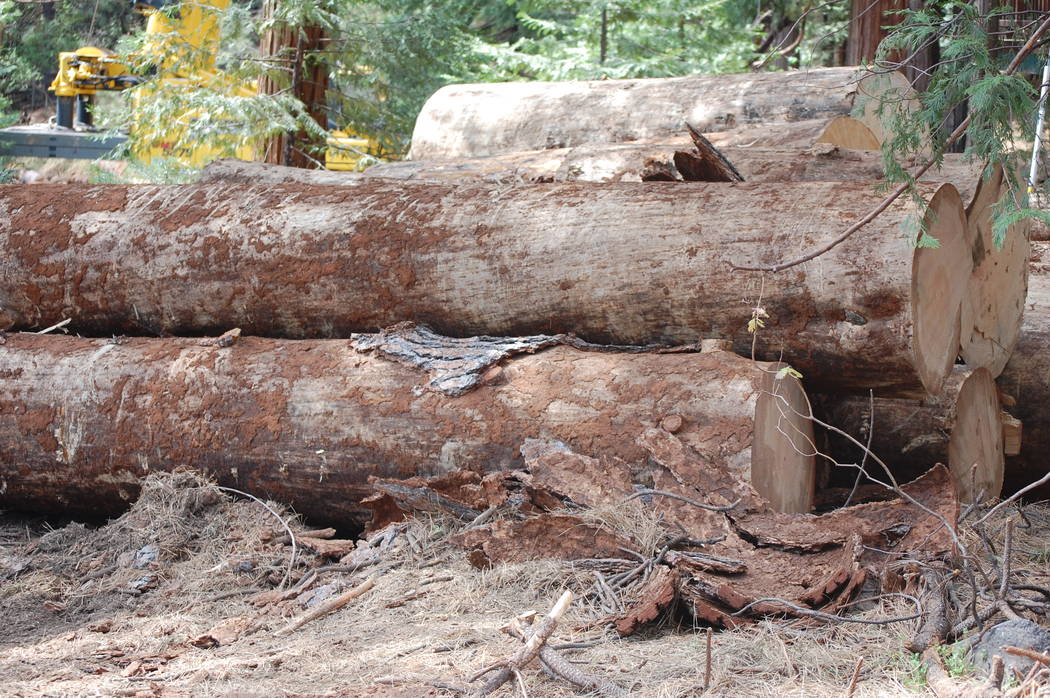 A stack of logs awaits transport near the town of Twain Harte, California, where contractors for Pacific Gas & Electric have been removing trees killed by drought and beetle infestation. Lynse ...