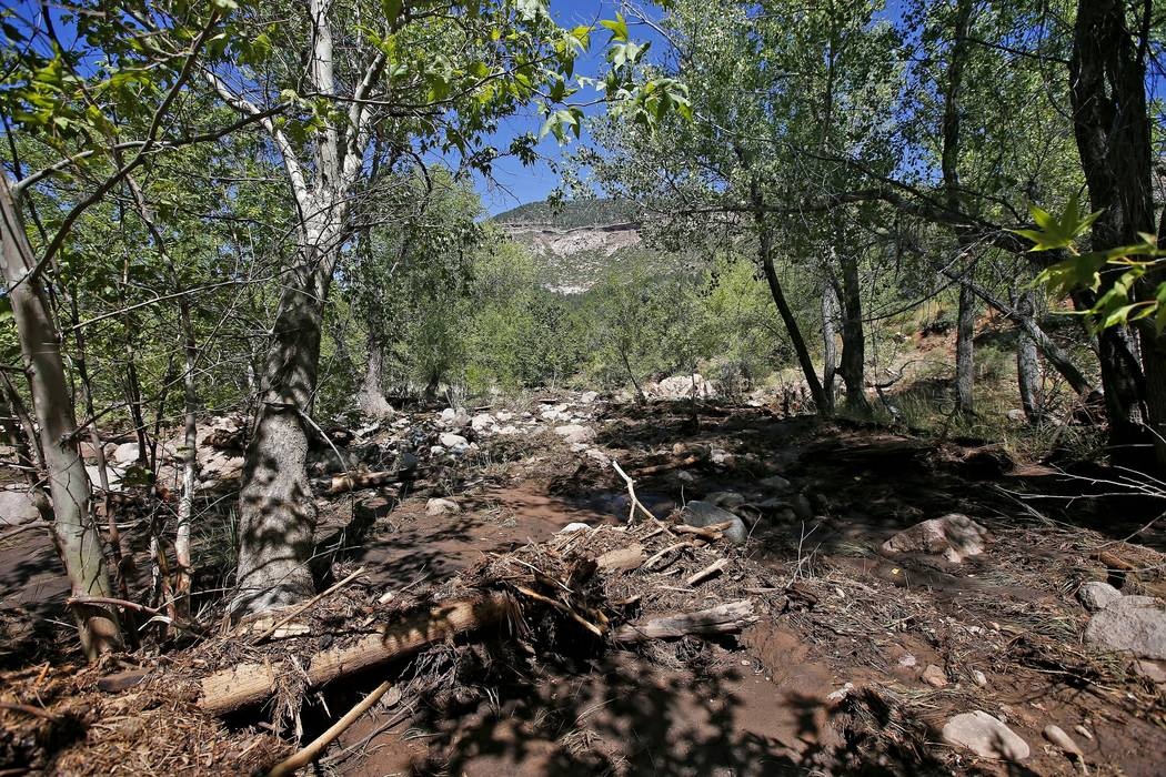 Dead trees, other debris and mud come to a stop near the First Crossing recreation area during the search and rescue operation for a victim in a flash flood along the banks of the East Verde River ...