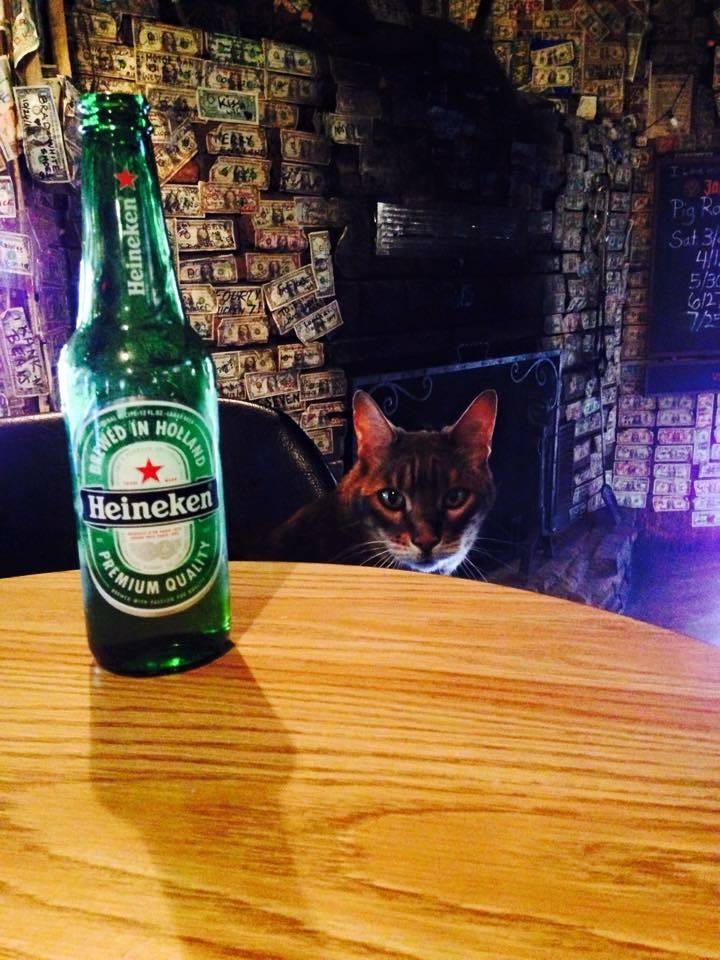 """Einstein, the cat, is a regular at this bar in one of the small towns """"Outdoor Nevada"""" has visited."""