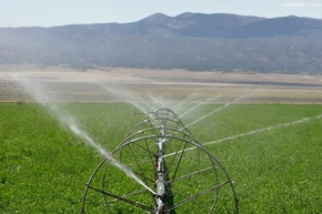 Alfalfa is watered in White Pine County's Spring Valley, where the Southern Nevada Water Authority plans to one day pump groundwater for use in Las Vegas. A federal court hearing in Las Vegas Mond ...