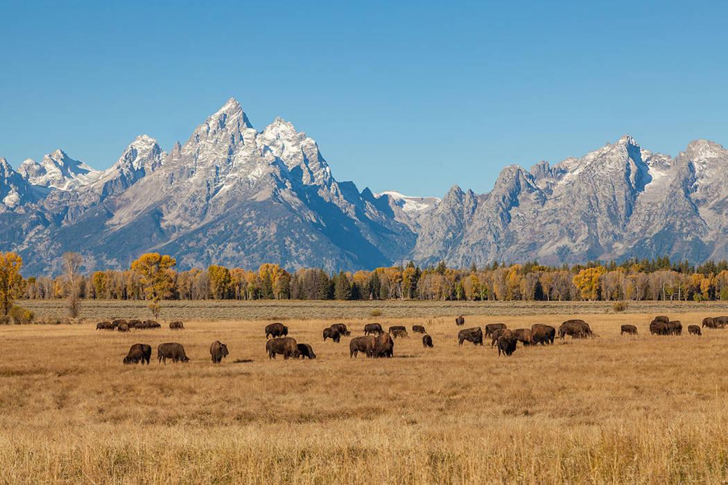 The Grand Tetons in Wyoming (Thinkstock)