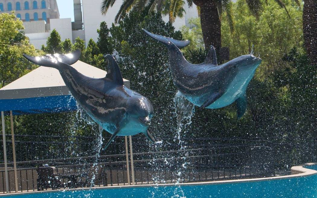 Dolphins at the Siegfried & Roy's Secret Garden and Dolphin Habitat at The Mirage. (Tom Donoghue)